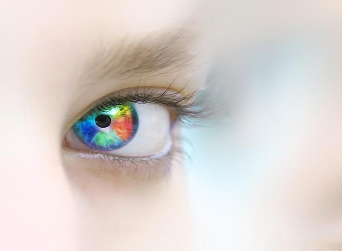 l'oeil-cet-organe-complexe